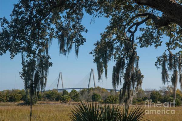 Photograph - Cooper River Bridge Run by Dale Powell