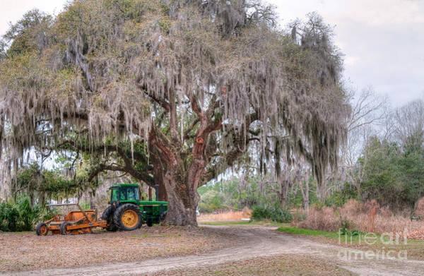 Photograph - Coosaw Cross Roads With Live Oak by Scott Hansen