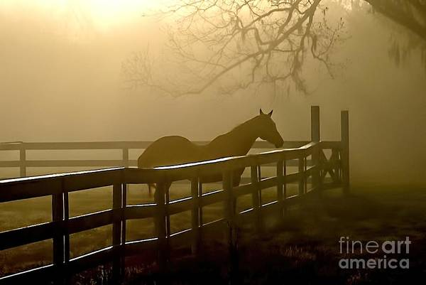 Photograph - Coosaw Early Morning Mist by Scott Hansen