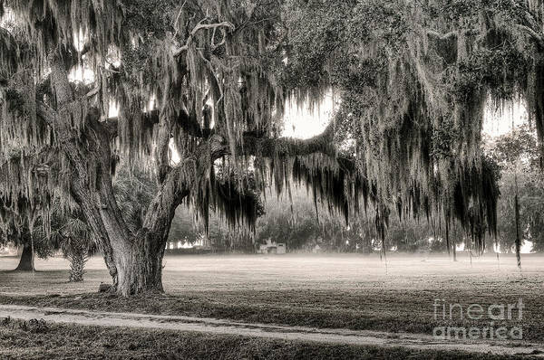 Photograph - Coosaw - Split Oak by Scott Hansen