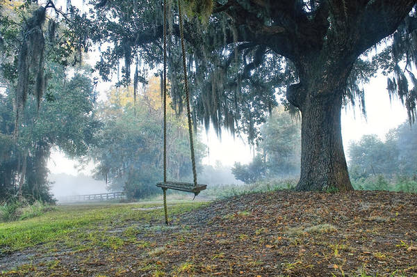 Photograph - Coosaw Tree Swing by Scott Hansen