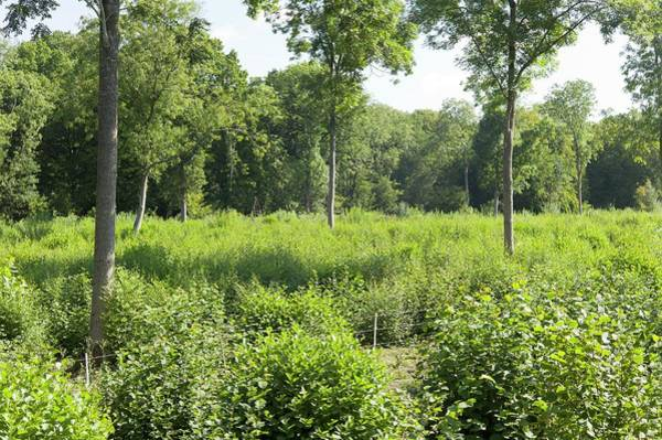 Coppice Photograph - Coppice Woodland In Late Summer by Dr Jeremy Burgess/science Photo Library