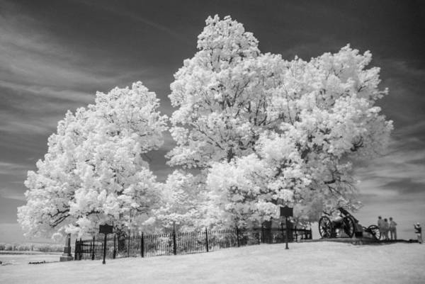 Photograph - Copse Of Trees 9d00053 by Guy Whiteley