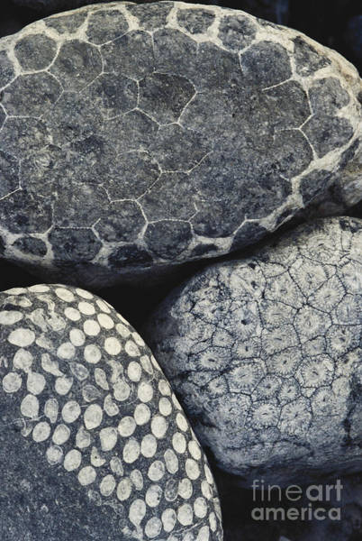 Photograph - Coral Fossils by Art Wolfe