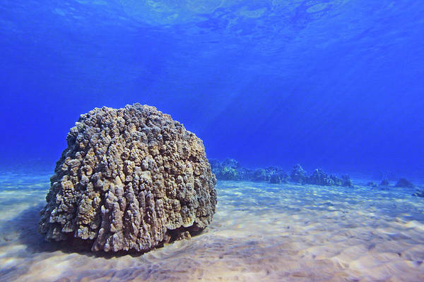 Underwater Scene Photograph - Coral Head by Chris Stankis