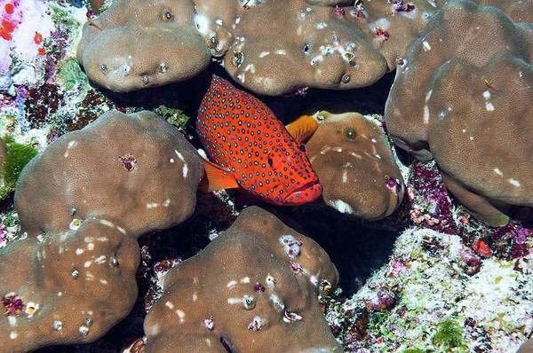 Wall Art - Photograph - Coral Hind by Georgette Douwma/science Photo Library