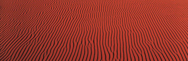 Untouched Wall Art - Photograph - Coral Pink Sand Dunes State Park Ut Usa by Panoramic Images