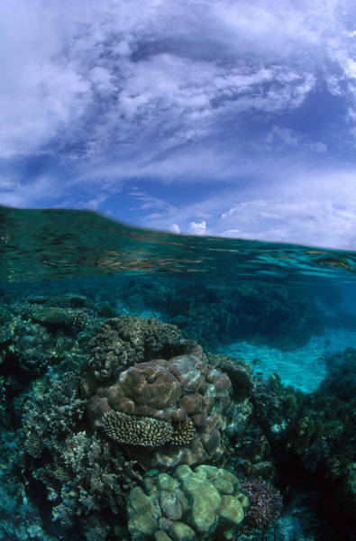 Wall Art - Photograph - Coral Reef In Palau by F. Stuart Westmorland