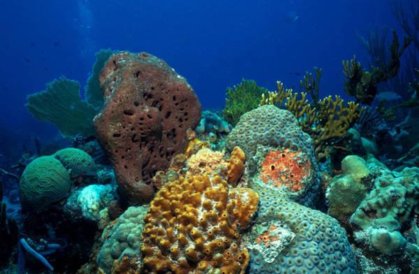 Wall Art - Photograph - Coral-sponge-gorgonian Association by Carleton Ray