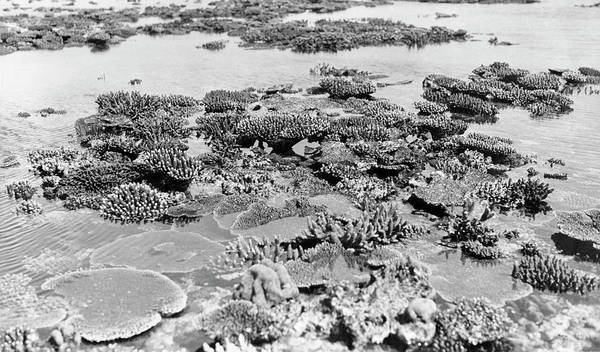 Wall Art - Photograph - Corals At Low Tide by Natural History Museum, London/science Photo Library