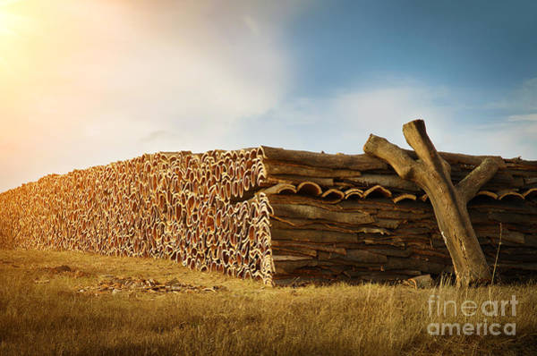 Harvesting Wall Art - Photograph - Cork Harvesting by Carlos Caetano