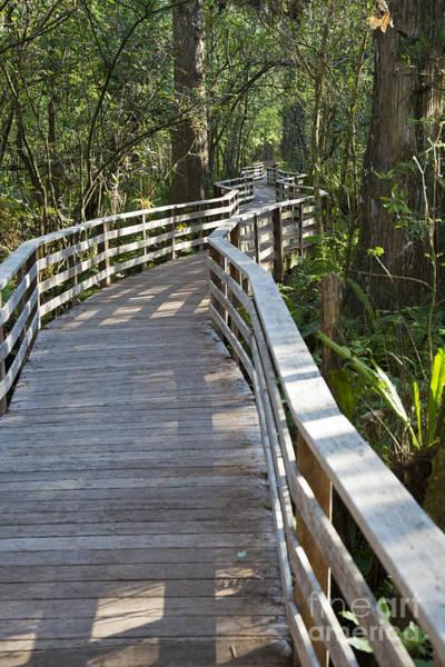 Photograph - Corkscrew Swamp by Jim West