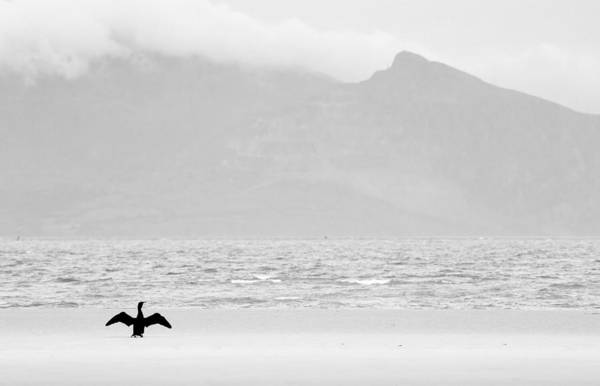 Photograph - Cormorant At Newborough by Peter OReilly