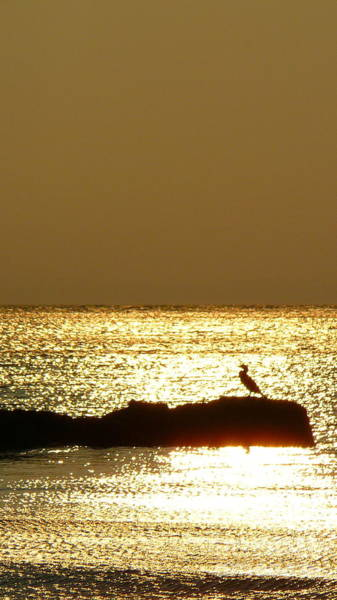 Squid Row Photograph - Cormorant At Sunset Lambert's Cove by Matt Dana