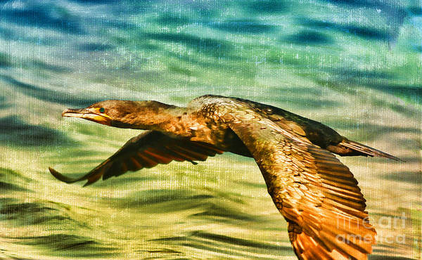 Photograph - Cormorant On The Move by Deborah Benoit