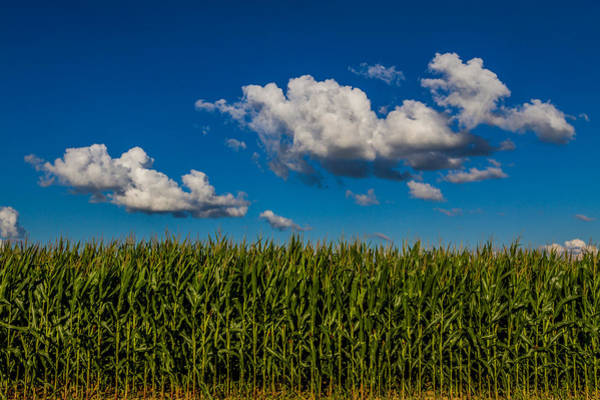 Photograph - Corn Field by Ron Pate