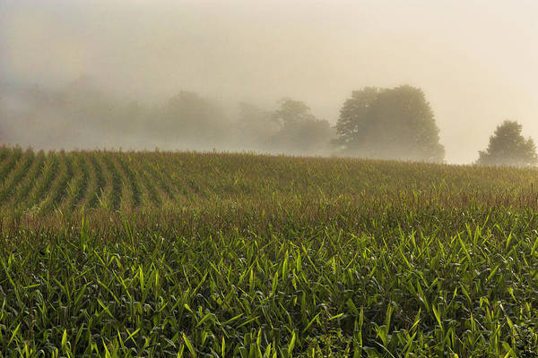 Photograph - Corn In The Mist by Tom Singleton