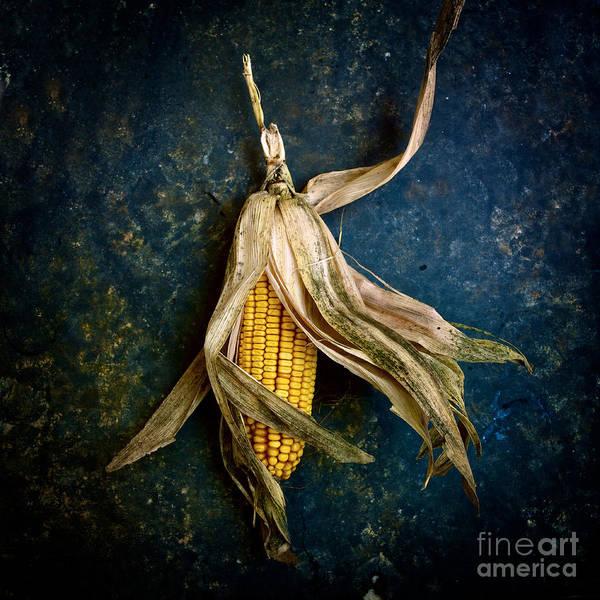 Corn Wall Art - Photograph - Corn On The Cob by Bernard Jaubert