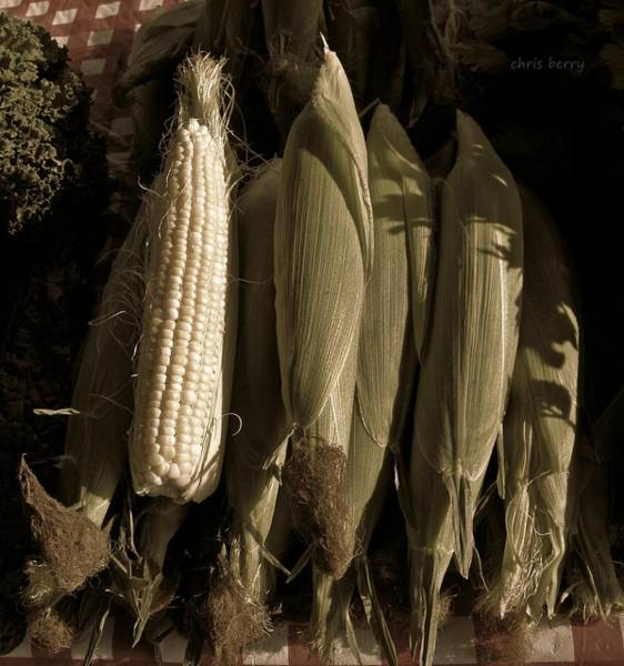 Wall Art - Photograph - Corn On The Cob  by Chris Berry