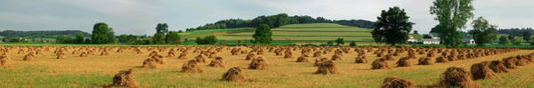 Amish Country Photograph - Corn Shocks, Amish Country, Ohio, Usa by Panoramic Images