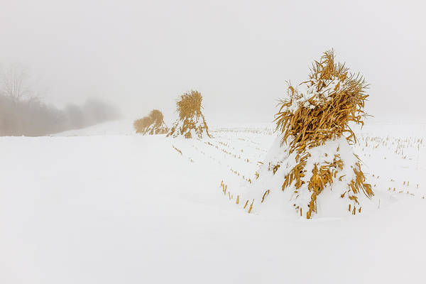 Wny Wall Art - Photograph - Corn Shocks In A Winter Field by Chris Bordeleau