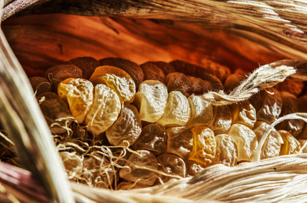 Corn Wall Art - Photograph - Corncave by Susan Capuano