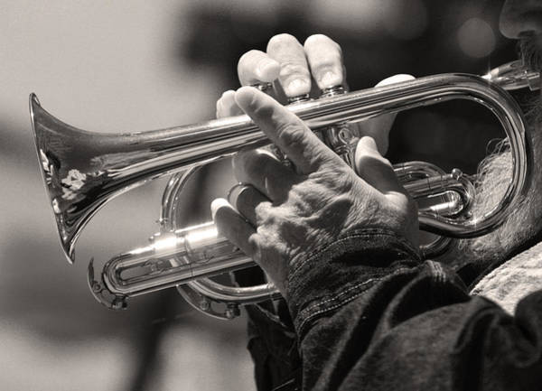 Photograph - Cornet In Sepia by James BO Insogna