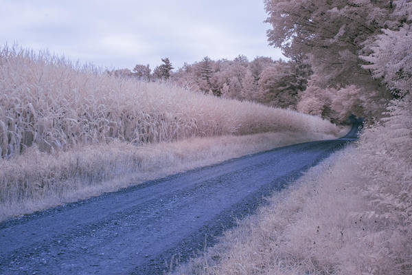 Photograph - Cornfield In Infrared by Tom Singleton