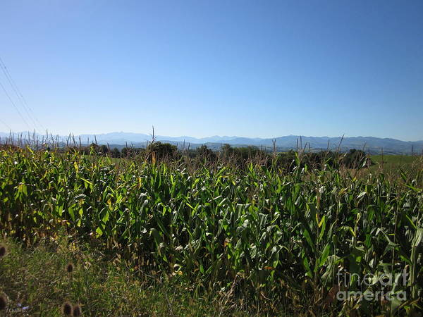 Photograph - Cornfield Near Labets-biscay by Chani Demuijlder