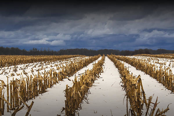 Photograph - Cornfield Stalks After The Harvest In Winter by Randall Nyhof