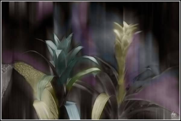 Photograph - Cornflower Apparition by Wayne King