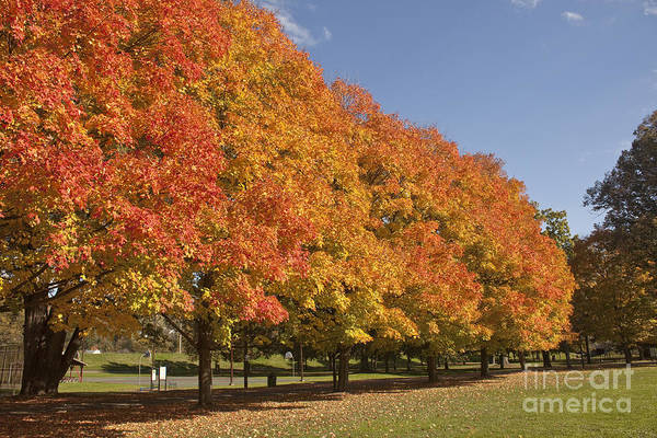 Photograph - Corning Fall Foliage 2 by Tom Doud