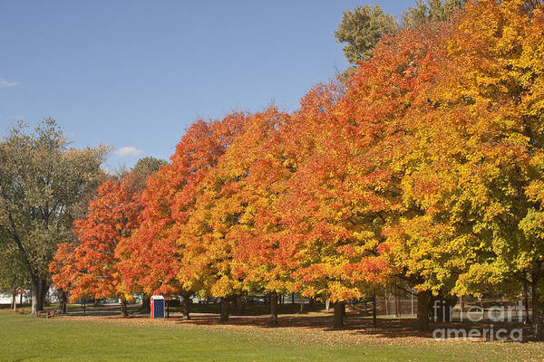 Photograph - Corning Fall Foliage 3 by Tom Doud