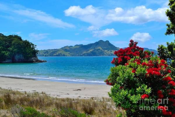 Pohutukawa Photograph - Coromandel-cooks Beach by Paul Kelly