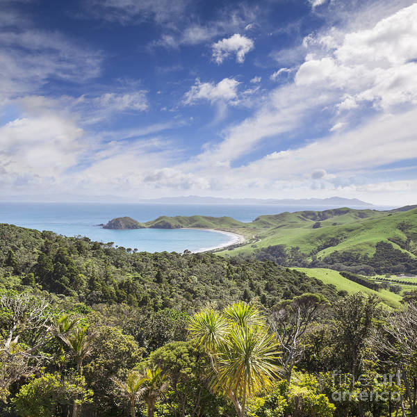 New Forest Photograph - Coromandel Port Jackson New Zealand by Colin and Linda McKie