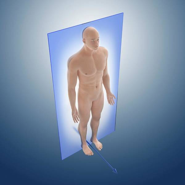 Reference Wall Art - Photograph - Coronal Anatomical Orientation Plane by Springer Medizin
