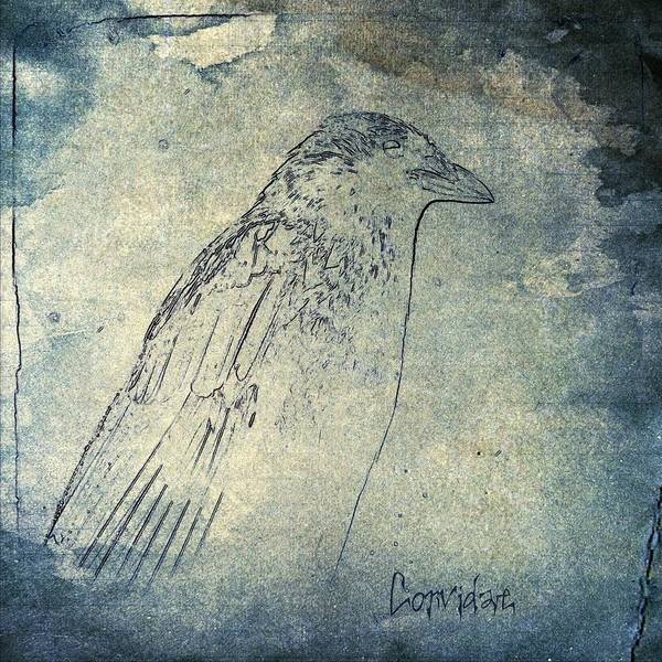 Faded Mixed Media - Faded Corvidae by Gothicrow Images