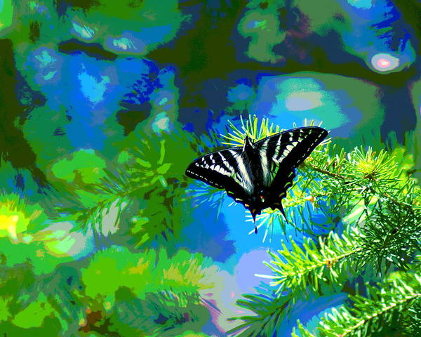 Photograph - Cosmic Butterfly In The Pines by Ben Upham III