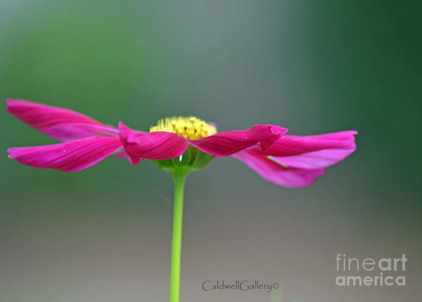 Wall Art - Photograph - Cosmo Dancer by Patricia Caldwell