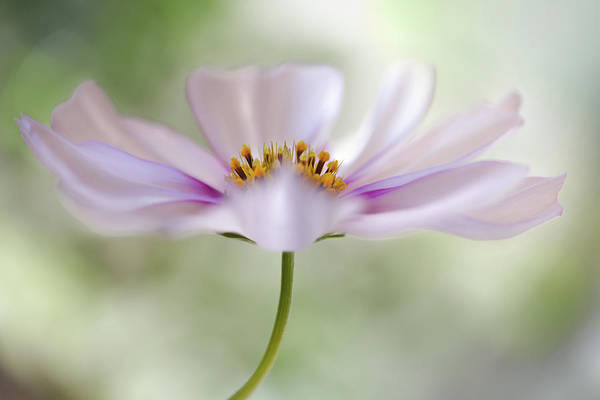 Bokeh Wall Art - Photograph - Cosmos Cloud by Mandy Disher