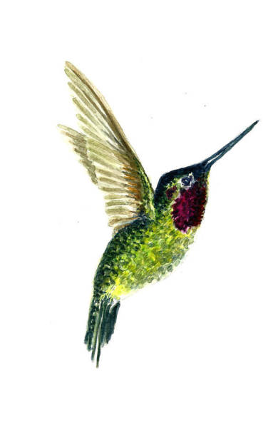 Wall Art - Painting - Costa's Hummingbird by Michael Vigliotti