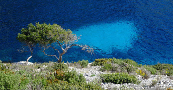 Photograph - Pine Trees At Azure Waters by August Timmermans
