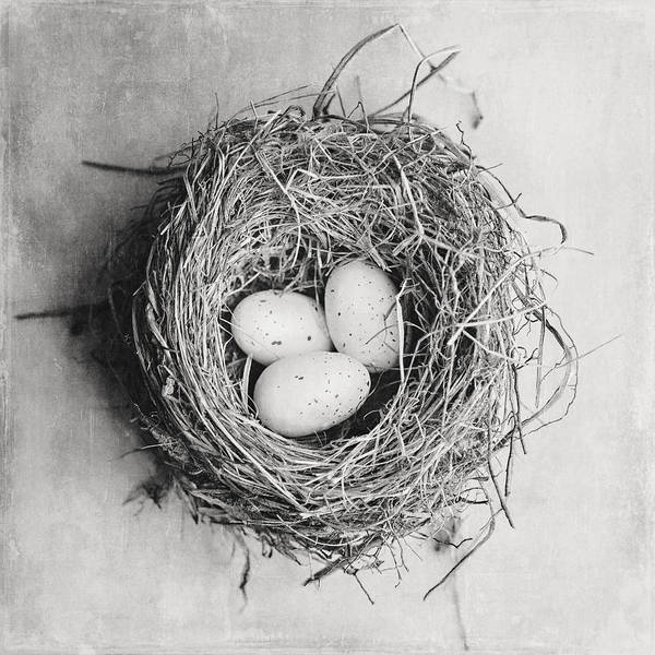 Lisa Russo Wall Art - Photograph - Cottage Bird's Nest In Black And White by Lisa Russo