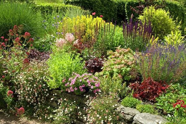 Annual Photograph - Cottage Garden by David Aubrey