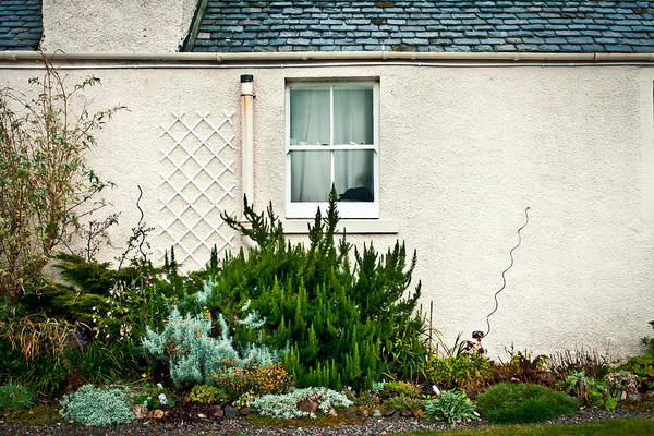 Flower Beds Photograph - Cottage Garden by Tom Gowanlock