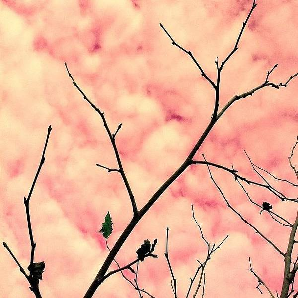 Minimalism Photograph - Cotton Candy by Courtney Haile
