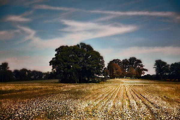 Photograph - Cotton Field Cemetery by Jai Johnson