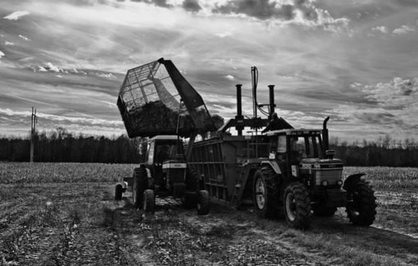 Cotton Harvest Art Print