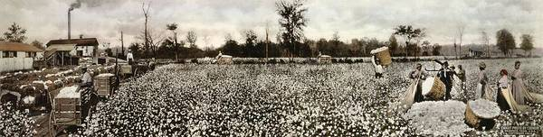 Wall Art - Photograph - Cotton Plantation by Library Of Congress