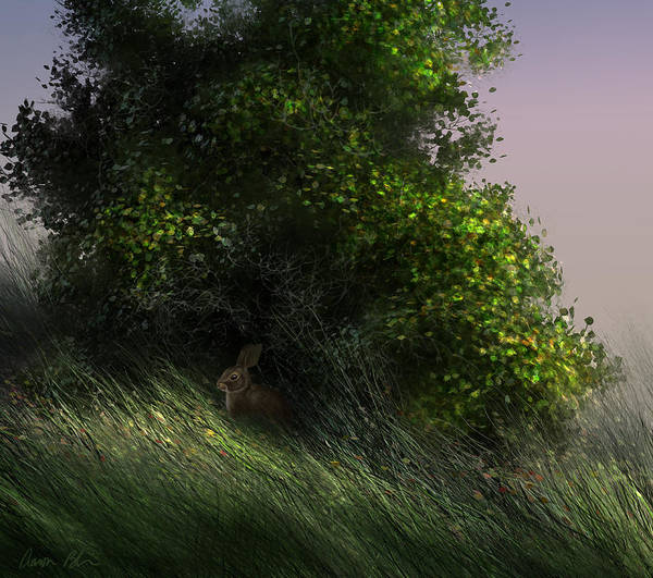 Wall Art - Digital Art - Cottontail by Aaron Blaise